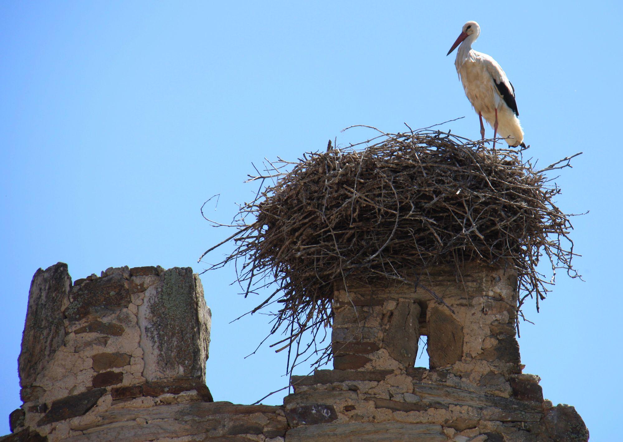 Ghostly Castle Ruins of Villanueva de Jamuz, Spain